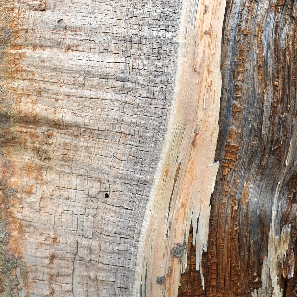 chicago creek wood 1787